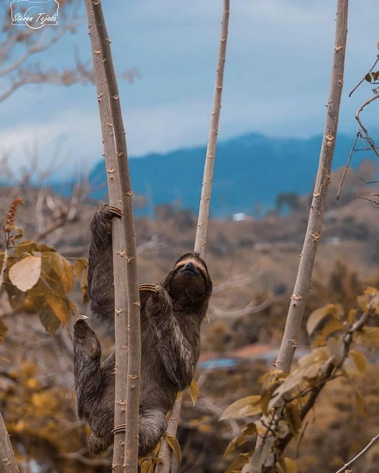 Más del 25% de su territorio está dedicado a parques y reservas nacionales y tierras protegidas (@visit_costarica)